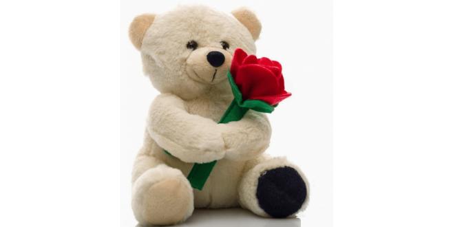 Birthday Gift Teddy
