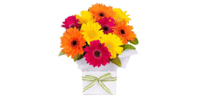 Big 40 Gerbera Box