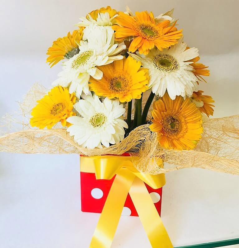 White & Yellow Gerbera Combo with Cute Box