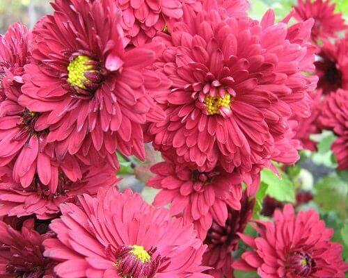 Flowers That Make Navratri Season Auspicious