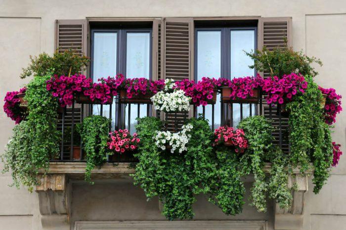 color flowers in window