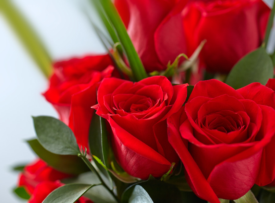 Red Roses Bouquets To Make Them Blush Blooms Only Pune