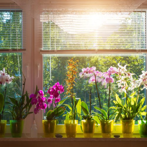 Useful and Easy Tips for Flower Care in Winters to Keep Them Healthy and Blooming